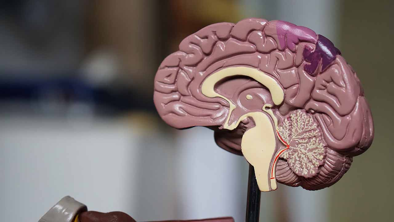 Brains of Teens with Autism Spectrum Disorder Work Differently